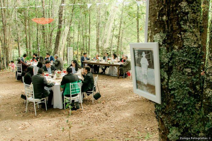 Este Banquete en el BOSQUE: ¿Te encanta o pasas? ❤️😒 2