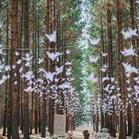 Boda secreta en el bosque - 2
