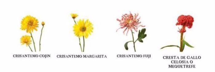 Tipos de flores - Todo tipo de plantas con sus nombres ...