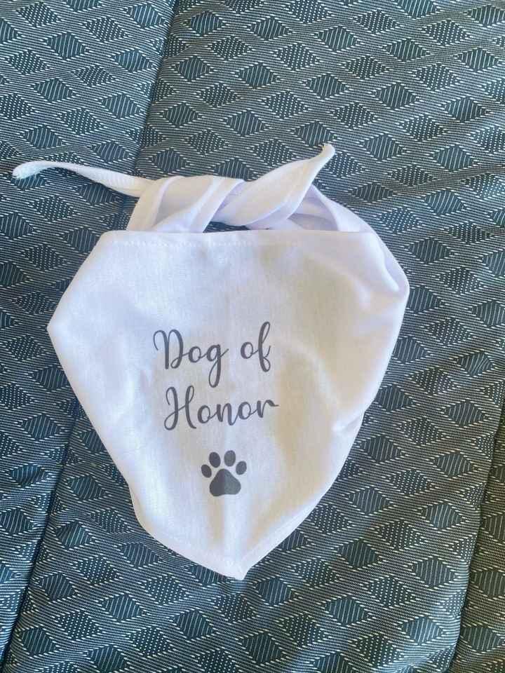 Sombrero luna de miel Aliexpress y pañoleta perrito de honor - 2