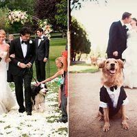 ¿Llevarás a tu mascota al matrimonio?