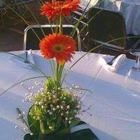 Flores para los centros de mesas...necesito ideas!!.... - 4