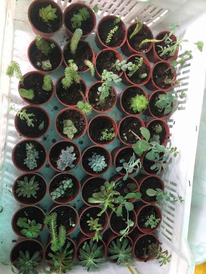 Seleccionando las plantitas