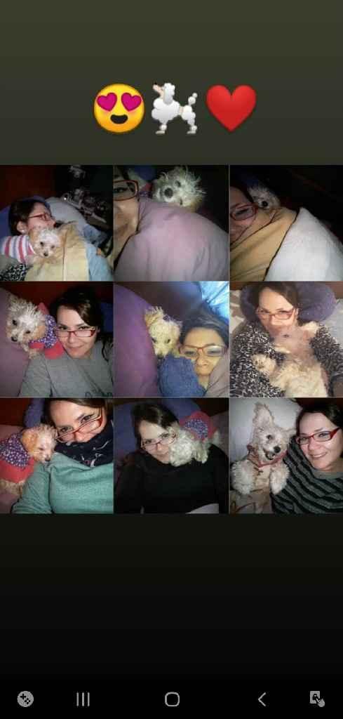Duermen con sus mascotas: ¿Sí o No? - 1
