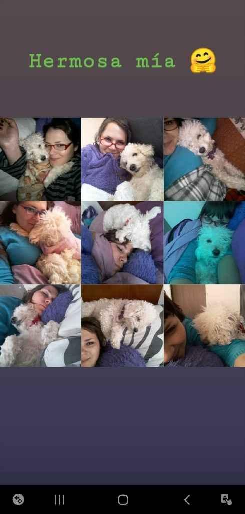 Duermen con sus mascotas: ¿Sí o No? - 2