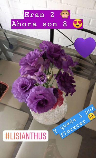 Consejito para las flores de nuestro gd 6