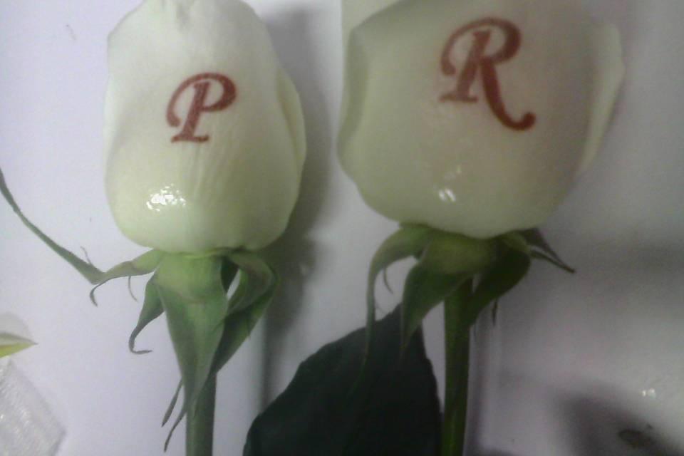 Enmagic Flores