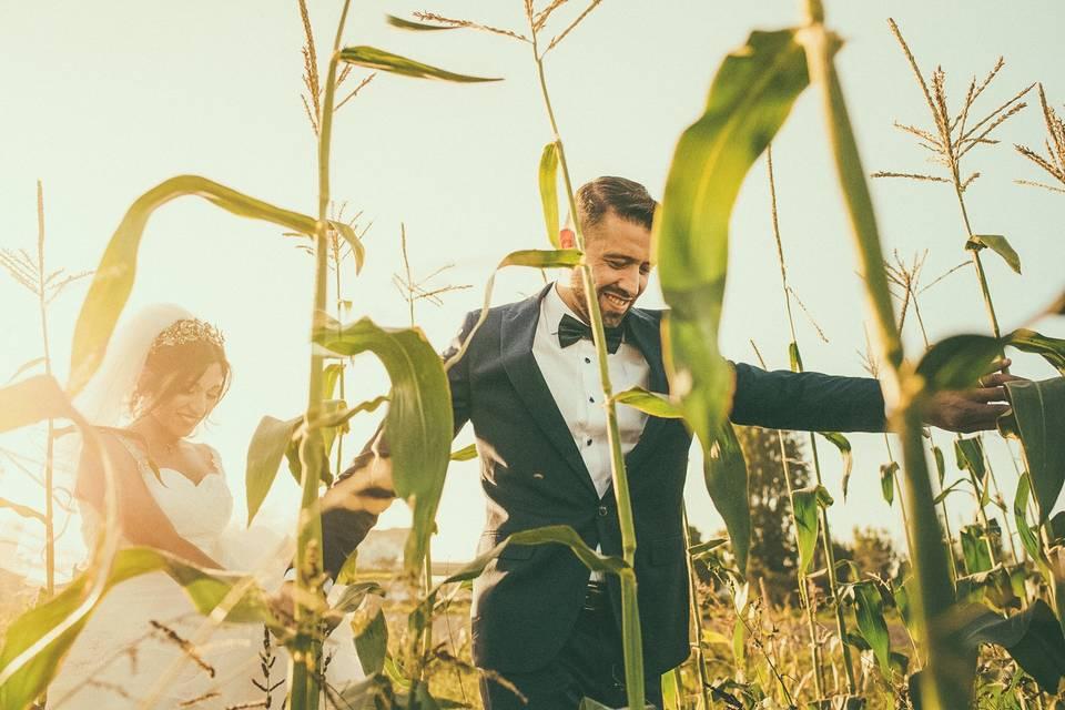 Tarde en campos de maíz